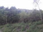 Annuncio vendita Caiazzo terreno bosco ceduo