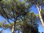 Annuncio affitto Sabaudia villa tra gli alberi con discesa a mare