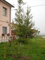 Annuncio vendita Migliarino villa in campagna