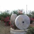 foto 5 - Ginosa tenuta a Taranto in Vendita