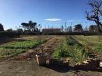 Annuncio vendita Terreno edificabile ai piedi di Cortona