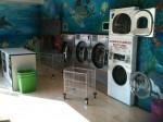 Annuncio vendita Quartu Sant'Elena attività di lavanderia