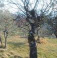 foto 3 - Arpino terreno panoramico a Frosinone in Vendita