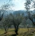 foto 2 - Arpino terreno panoramico a Frosinone in Vendita