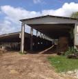 foto 4 - Amelia antica azienda agricola a Terni in Vendita