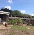 foto 3 - Amelia terreno agricolo con capannone a Terni in Vendita