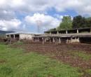 Annuncio vendita Amelia terreno agricolo con capannone