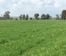 Annuncio vendita Fiumicino terreno agricolo