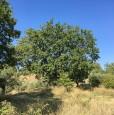 foto 3 - Montesilvano Colle località Trave terreno agricolo a Pescara in Vendita