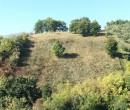 Annuncio vendita Montesilvano Colle località Trave terreno agricolo