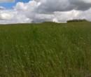 Annuncio vendita Località Tottubella terreno agricolo