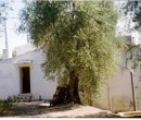Annuncio vendita Vico del Gargano abitazione con terreno