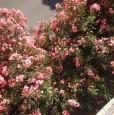 foto 1 - Diano Marina zona viale Kennedy bilocale a Imperia in Affitto