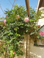 Annuncio vendita Ardea appartamento con giardino