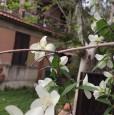 foto 3 - Frascati prossimità stazione appartamenti a Roma in Vendita