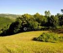 Annuncio vendita Santa Fiora terreno situato in località Le Vigne