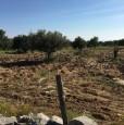 foto 2 - Scicli terreno agricolo in parte edificabile a Ragusa in Vendita