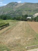 Annuncio vendita Pietravairano appezzamento di terreno agricolo