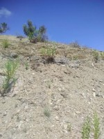 Annuncio vendita Cerda terreno per apertura cava