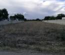 Annuncio vendita Pulsano terreno agricolo