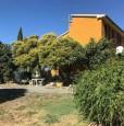 foto 6 - Cinigiano podere confinante con tenuta Montecucco a Grosseto in Vendita