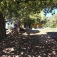 foto 4 - Cinigiano podere confinante con tenuta Montecucco a Grosseto in Vendita