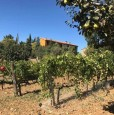 foto 3 - Cinigiano podere confinante con tenuta Montecucco a Grosseto in Vendita