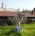 foto 0 - Termini Imerese villa ammobiliata con terreno a Palermo in Vendita