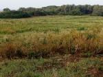 Annuncio vendita Terreno agricolo ad Alghero