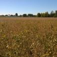 foto 0 - Cadoneghe terreno agricolo a Padova in Vendita
