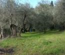 Annuncio vendita Firenze terreno agricolo zona collinare di Careggi