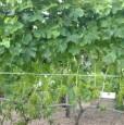 foto 3 - Calatabiano terreno agricolo a Catania in Vendita