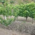 foto 0 - Calatabiano terreno agricolo a Catania in Vendita