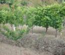 Annuncio vendita Calatabiano terreno agricolo