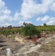 foto 1 - Carlentini in contrada Sabuci terreno edificabile a Siracusa in Vendita