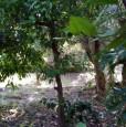 foto 16 - Rustico a Torretta di Acquafredda di Maratea a Potenza in Vendita