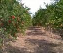 Annuncio vendita Paternò proprietà con impianto di irrigazione nuovo