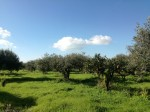 Annuncio vendita Sciacca terreno agricolo in zona piana Scunchipani