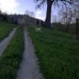 foto 6 - Sarsina rustico a Forli-Cesena in Vendita