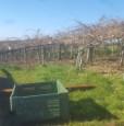 foto 0 - Albano Laziale terreno agricolo a Roma in Vendita