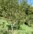 foto 2 - Chiusi della Verna casolare tipico a Arezzo in Vendita