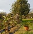 foto 2 - Bientina casale nel verde della Toscana a Pisa in Vendita