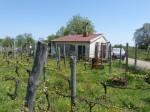 Annuncio vendita Sarconi terreno agricolo