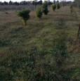 foto 15 - Terreno agricolo nell'agro di Uta a Cagliari in Vendita