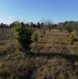 foto 13 - Terreno agricolo nell'agro di Uta a Cagliari in Vendita