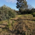 foto 12 - Terreno agricolo nell'agro di Uta a Cagliari in Vendita