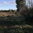 foto 9 - Terreno agricolo nell'agro di Uta a Cagliari in Vendita