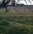 foto 8 - Terreno agricolo nell'agro di Uta a Cagliari in Vendita