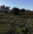 foto 5 - Terreno agricolo nell'agro di Uta a Cagliari in Vendita