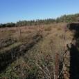 foto 3 - Terreno agricolo nell'agro di Uta a Cagliari in Vendita